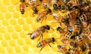 Brighton Bees